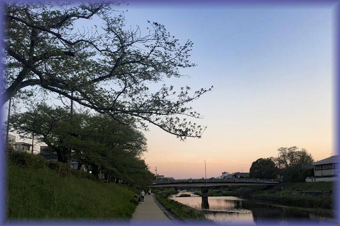 f:id:nakkacho902:20200426212128j:plain