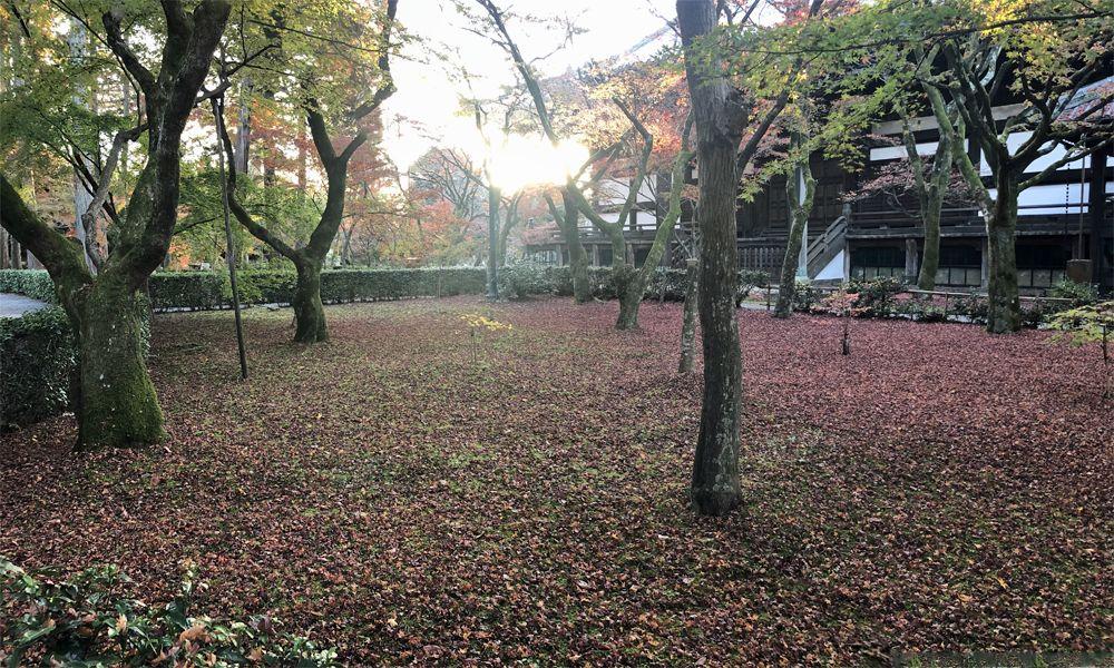 f:id:nakkacho902:20201130144721j:plain