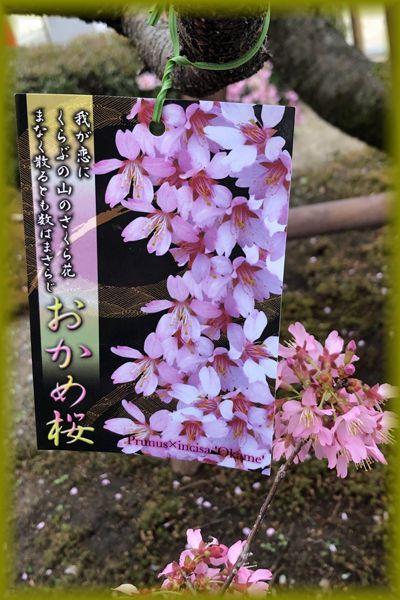 f:id:nakkacho902:20210308111054j:plain