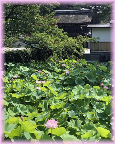 f:id:nakkacho902:20210802113540j:plain