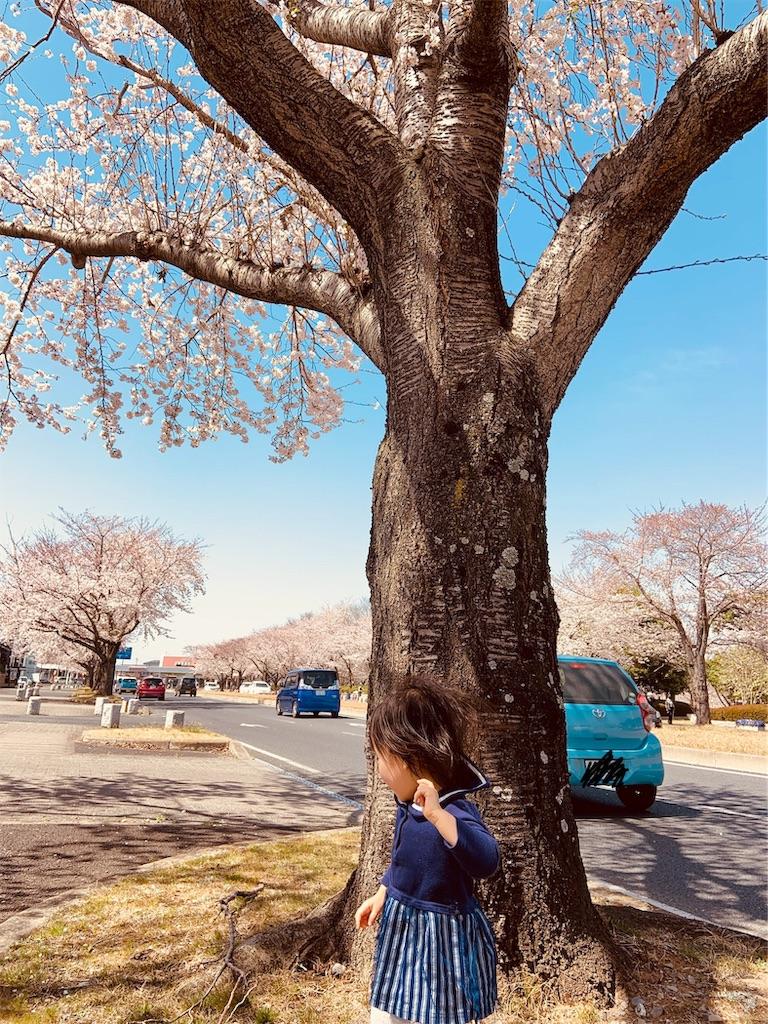 f:id:namahideki:20190407024803j:image