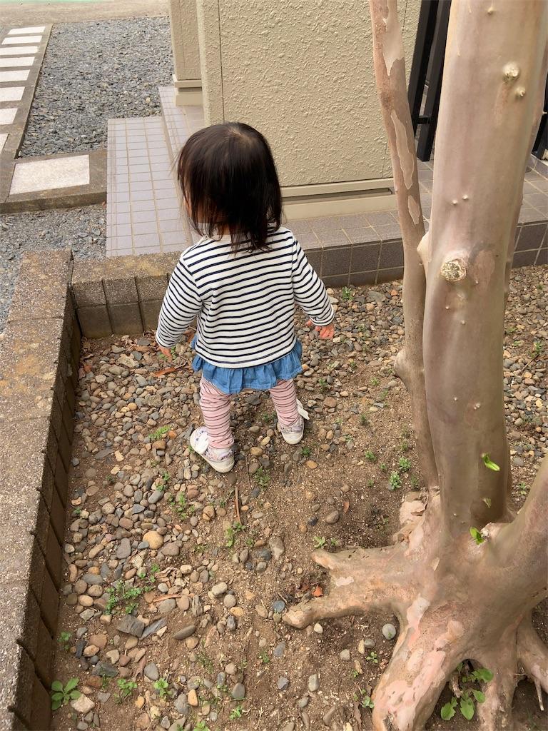 f:id:namahideki:20190407231948j:image