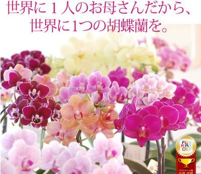 f:id:namakouso:20170413003727j:plain