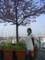 2009/02/15、河津の桜と菜の花@伊東マリンタウン。