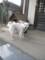 2009/03/21、珍しく犬と遊んでみる。