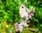 京都新聞写真コンテスト 花に舞う