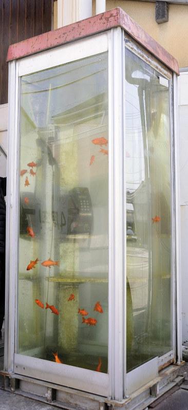 金魚電話ボックス問題_1
