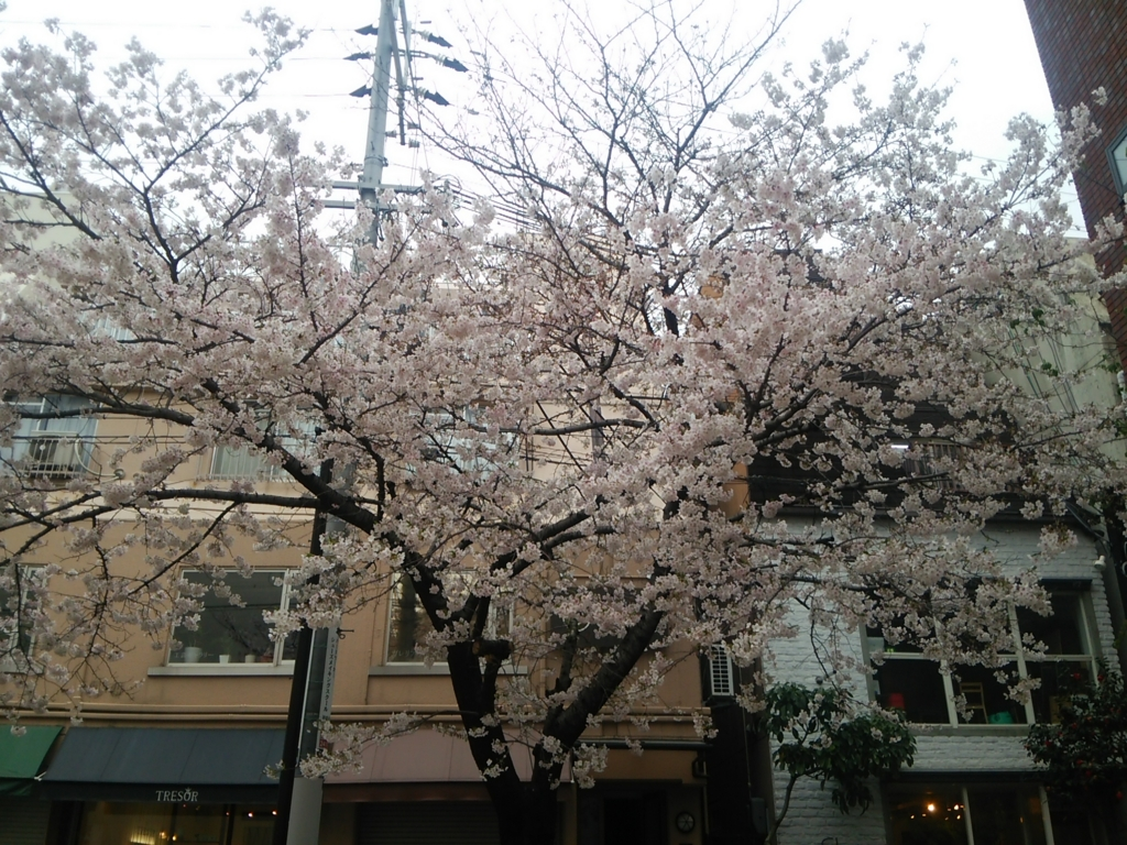 f:id:naminonamimatsu:20170409120418j:plain