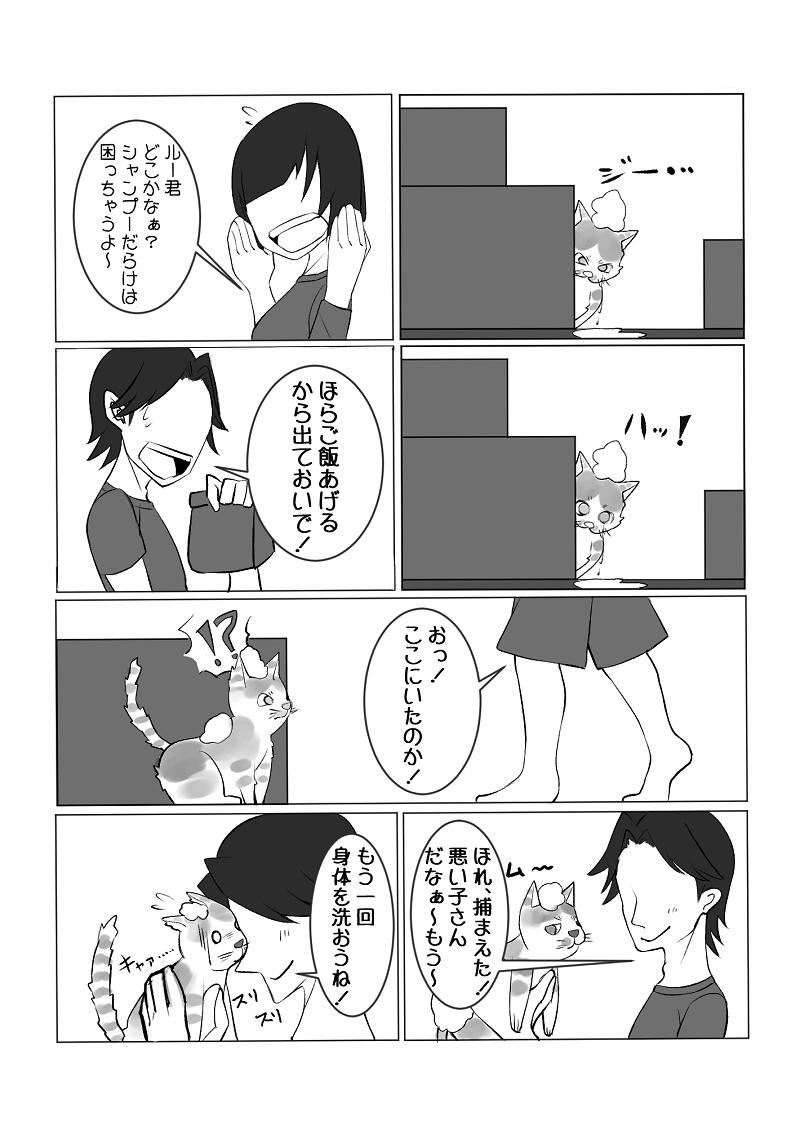f:id:namomaru:20200112204146p:plain