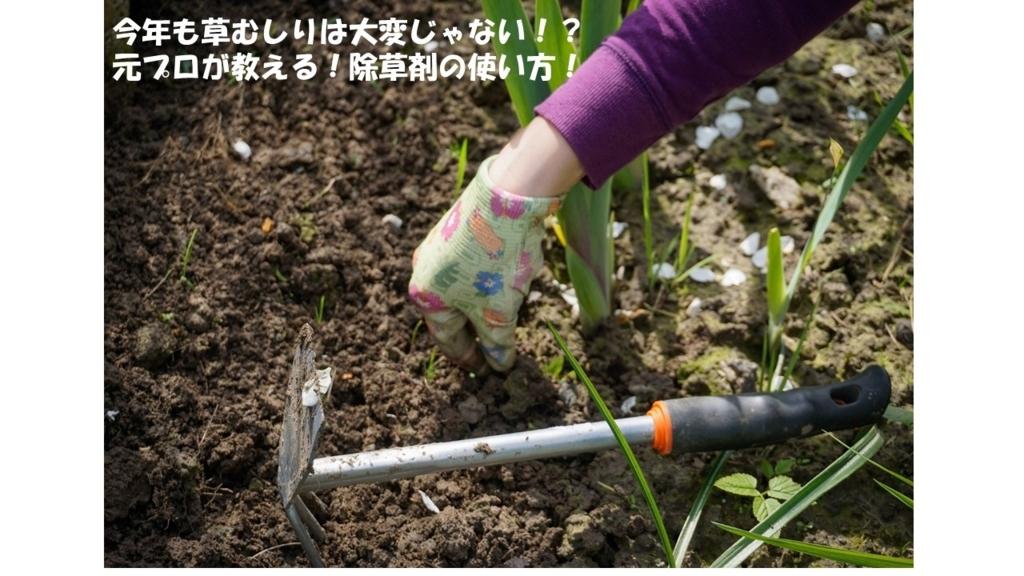 f:id:namuramura:20170711121716j:plain