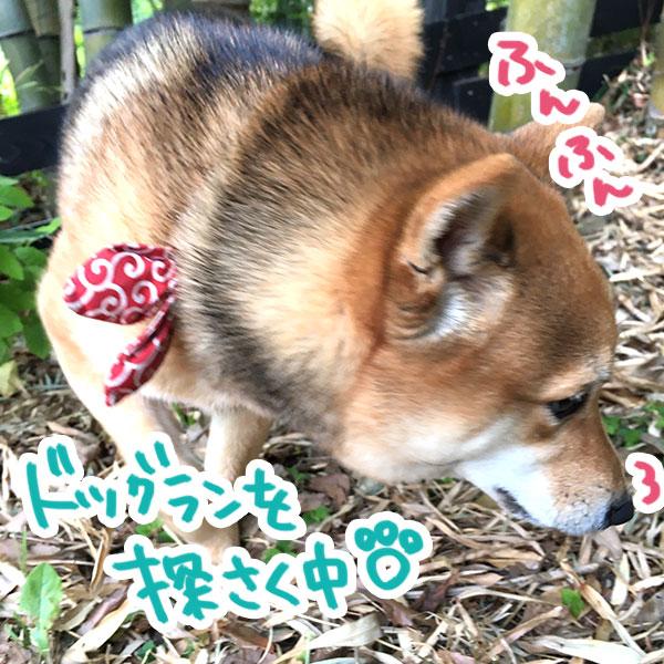 f:id:nana-hachikyu:20170517113028j:plain
