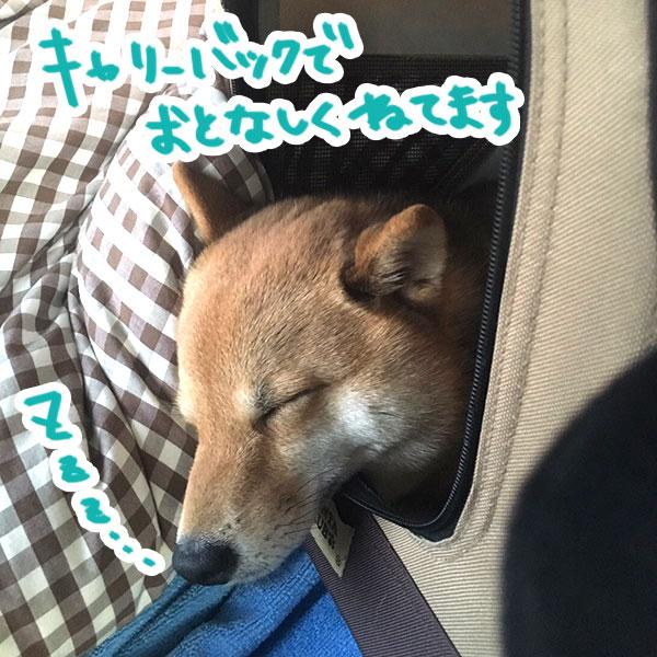 f:id:nana-hachikyu:20170517121158j:plain