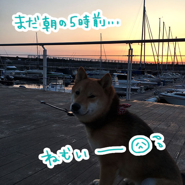 f:id:nana-hachikyu:20170517184831j:plain