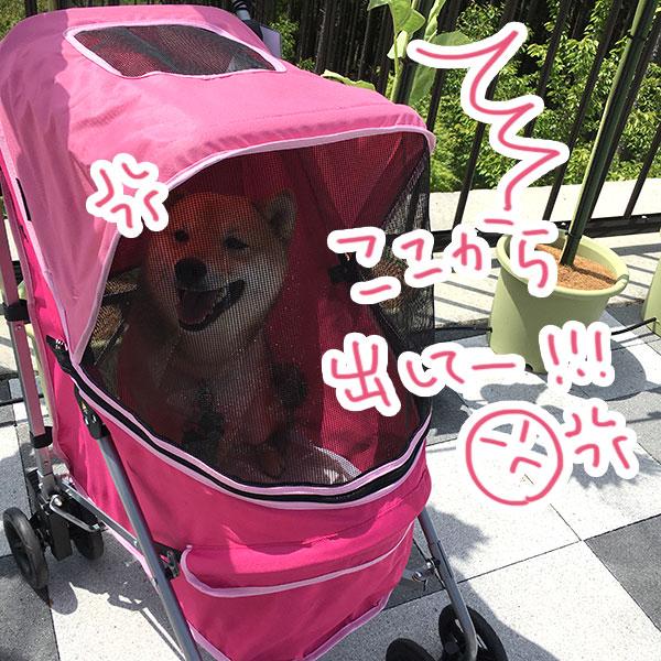 f:id:nana-hachikyu:20170517191244j:plain