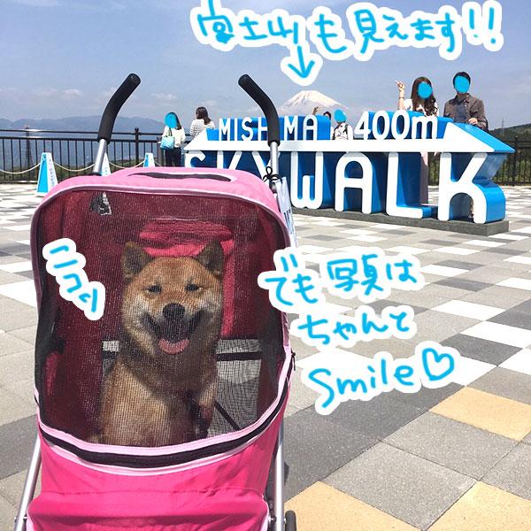 f:id:nana-hachikyu:20170517191322j:plain