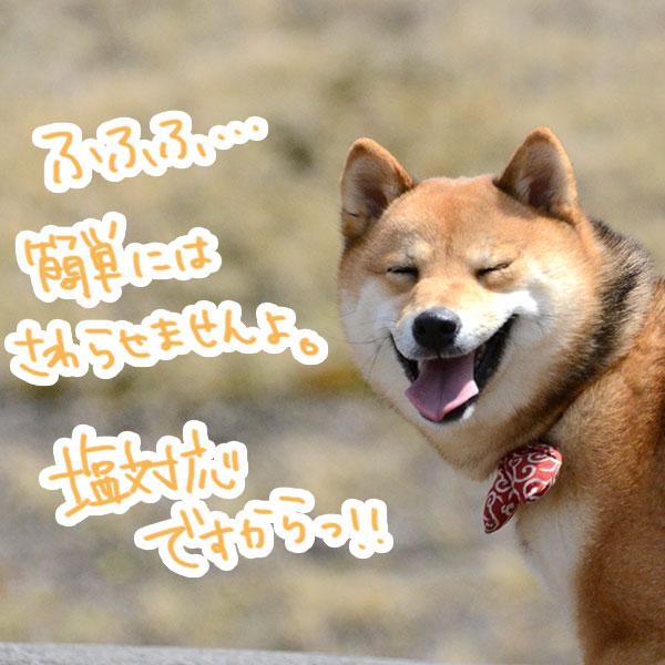 f:id:nana-hachikyu:20170517192210j:plain