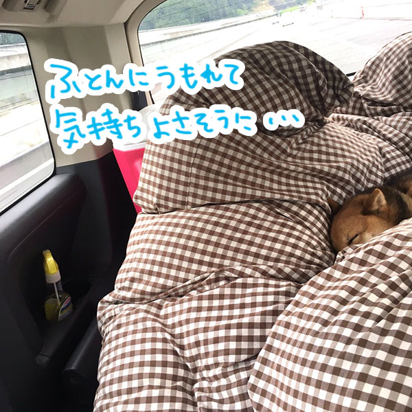 f:id:nana-hachikyu:20170517192912j:plain