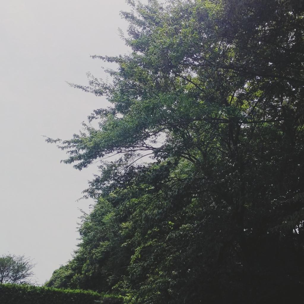 f:id:nana00maru:20180708004326j:plain