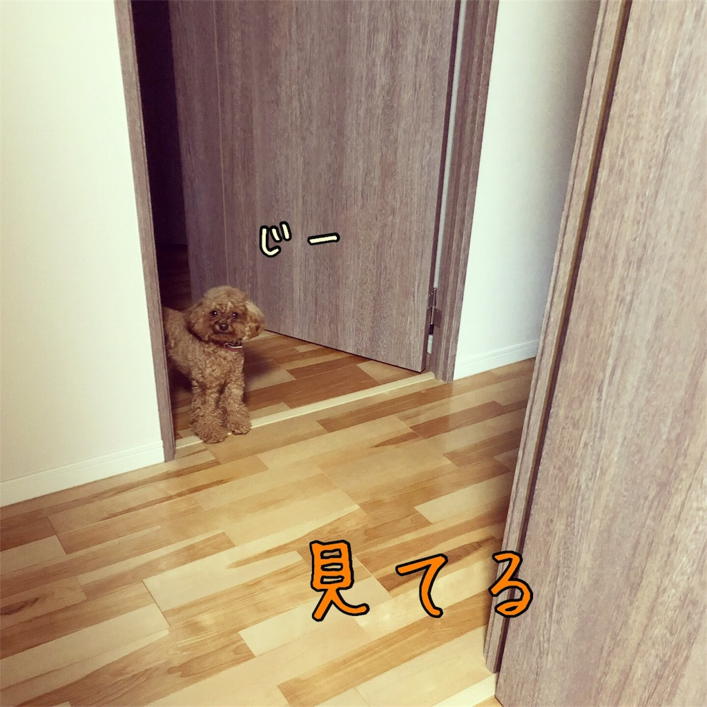 f:id:nana_p:20180118230251j:image