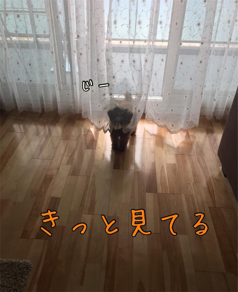 f:id:nana_p:20180118230334j:image