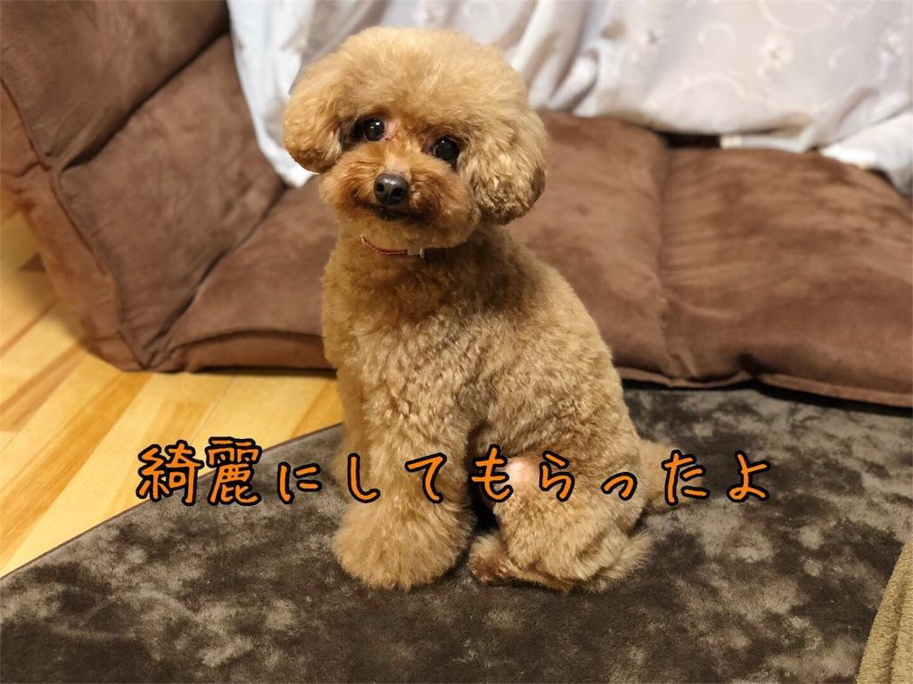 f:id:nana_p:20180128201853j:image