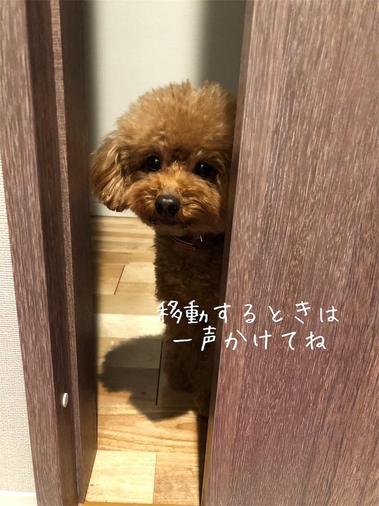 f:id:nana_p:20180131080442j:image