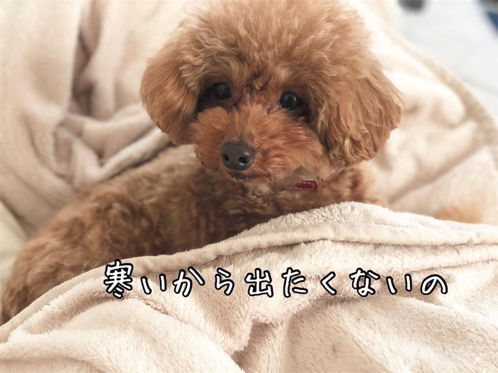 f:id:nana_p:20180202075513j:image