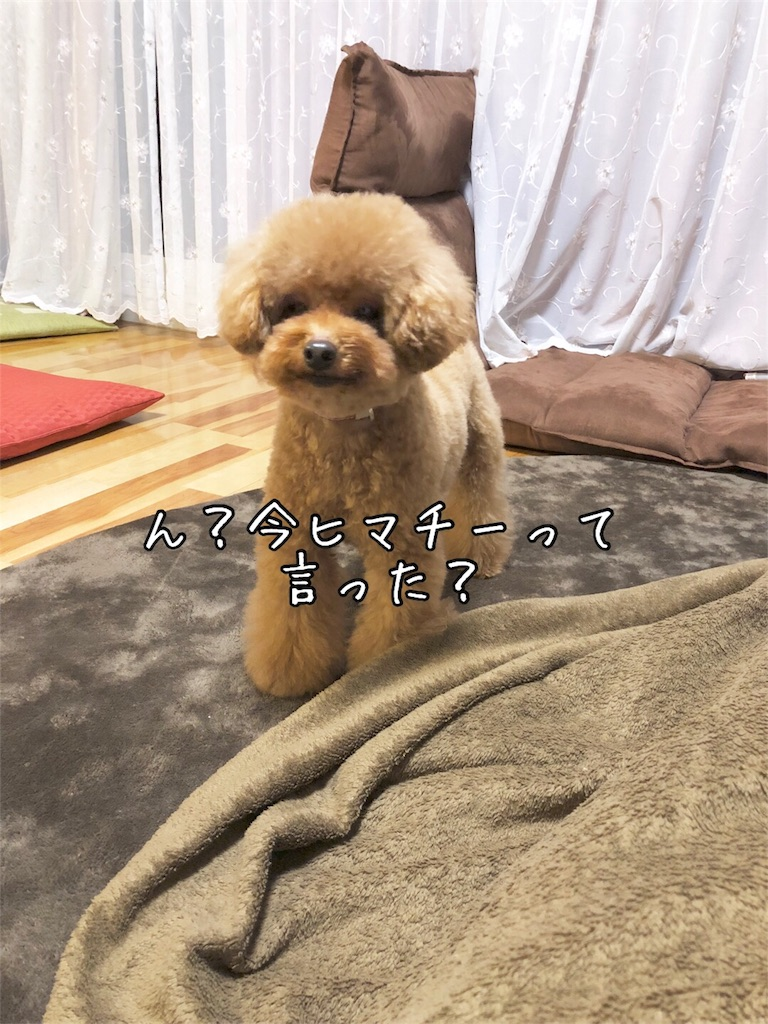 f:id:nana_p:20180203165140j:image
