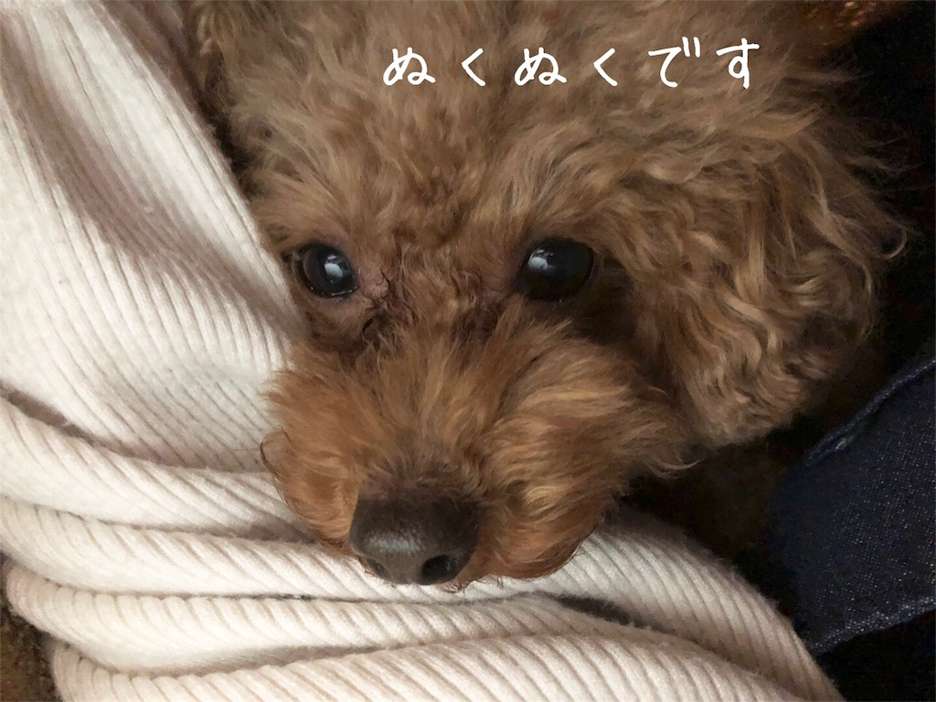 f:id:nana_p:20180204184938j:image
