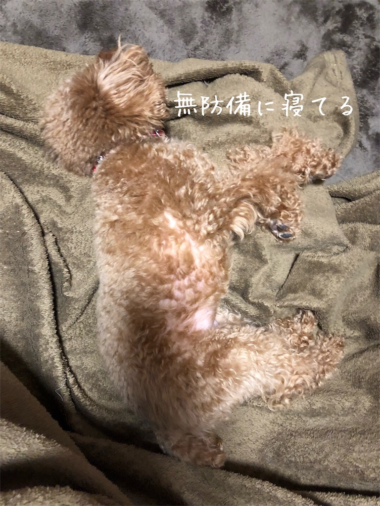 f:id:nana_p:20180206194221j:image