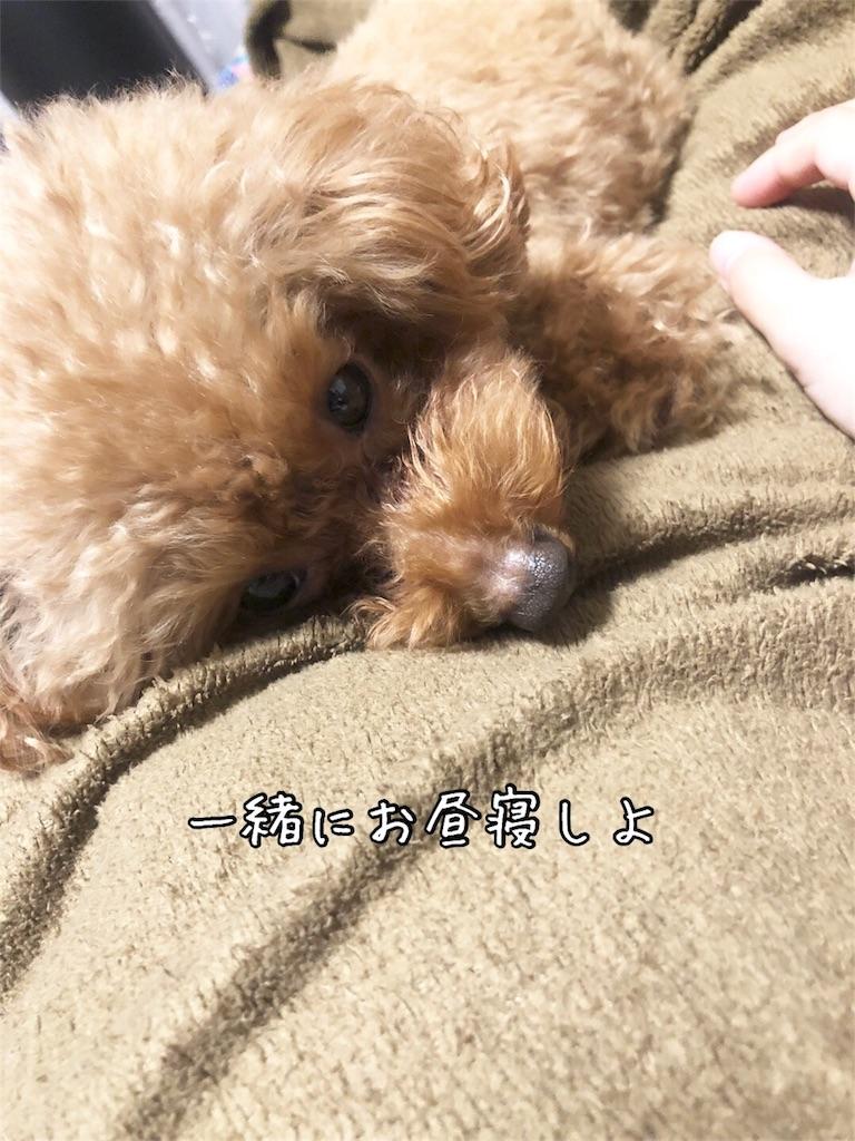f:id:nana_p:20180210183200j:image