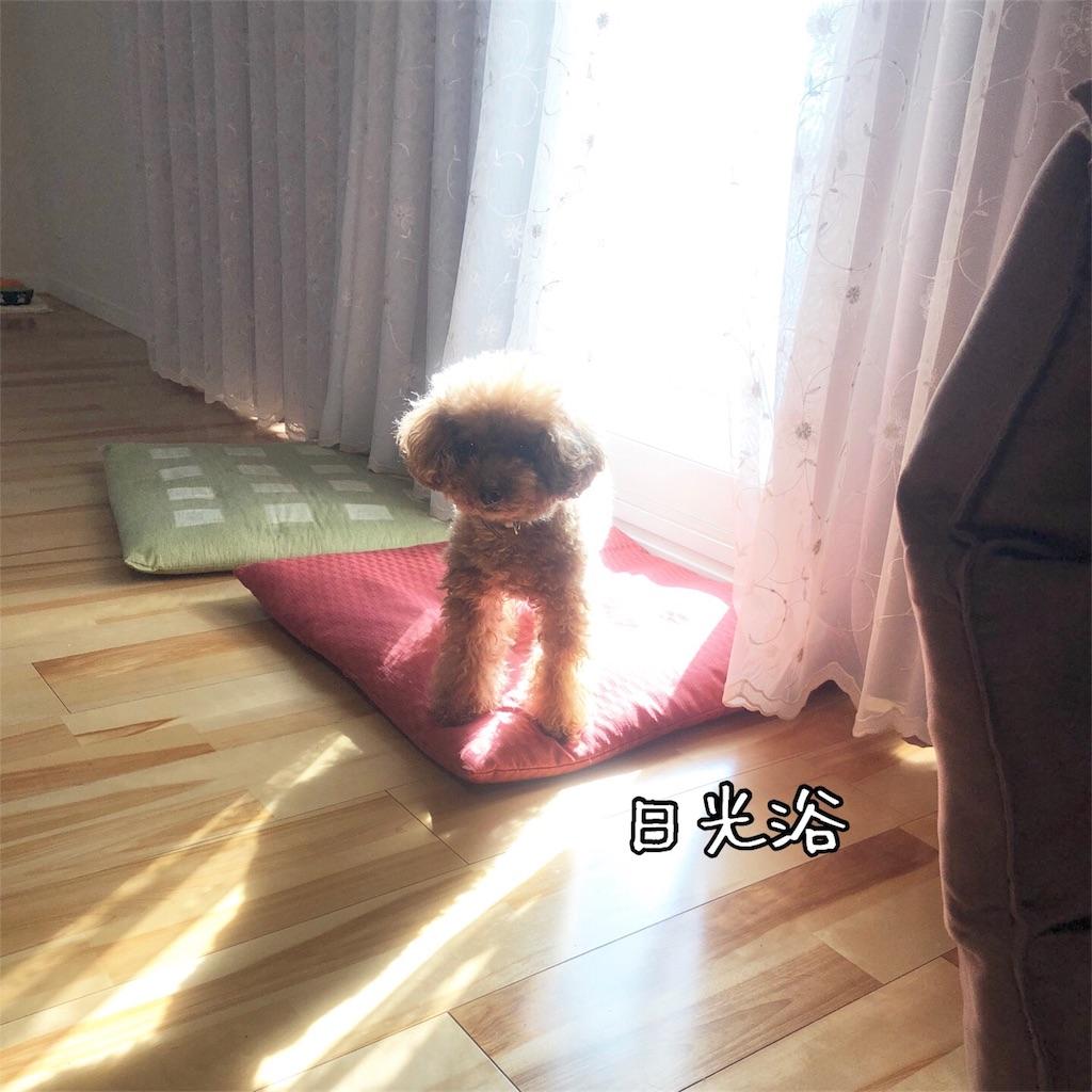 f:id:nana_p:20180211200300j:image