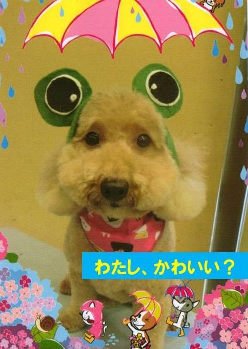 f:id:nanachan59:20170724120937j:plain