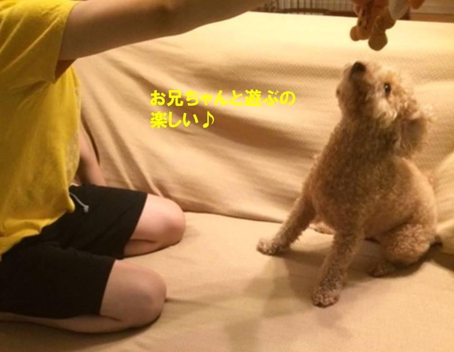 f:id:nanachan59:20170724200330j:plain