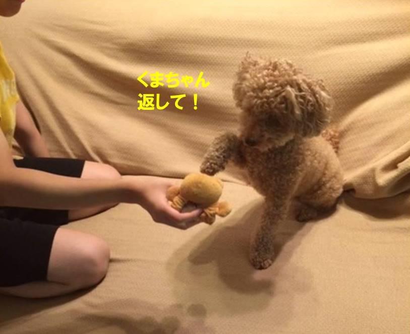 f:id:nanachan59:20170724200343j:plain