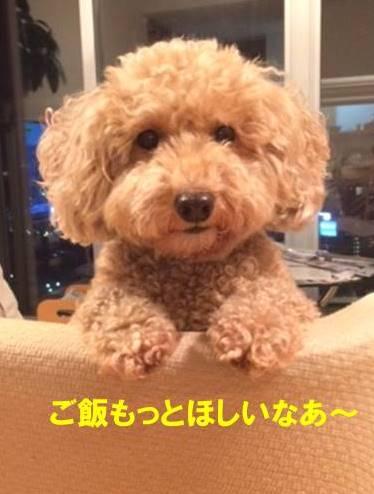 f:id:nanachan59:20170725211758j:plain
