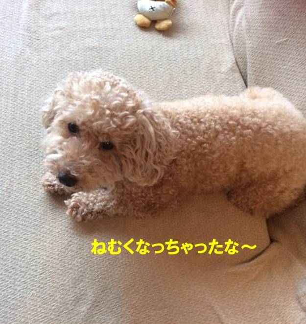 f:id:nanachan59:20170727210509j:plain