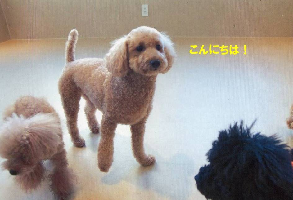 f:id:nanachan59:20170728203821j:plain