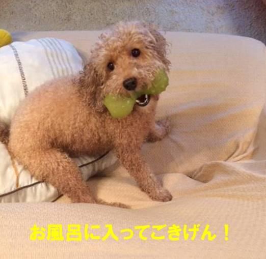 f:id:nanachan59:20170729205858j:plain