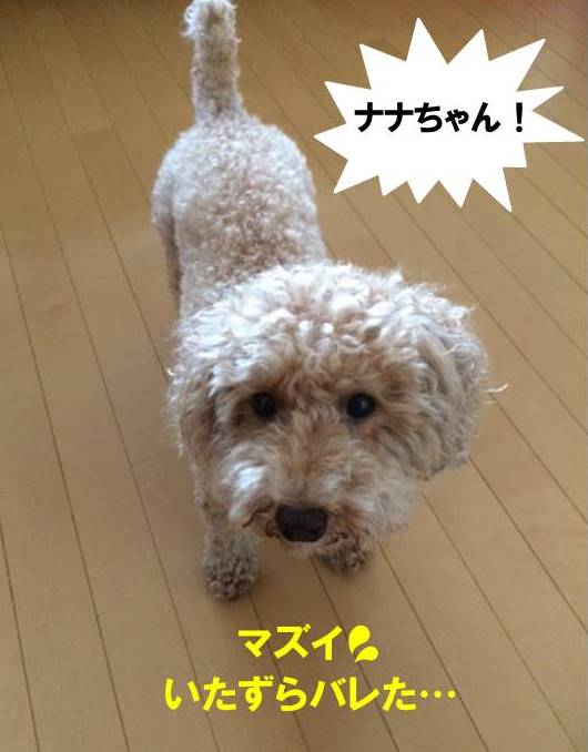 f:id:nanachan59:20170730203701j:plain