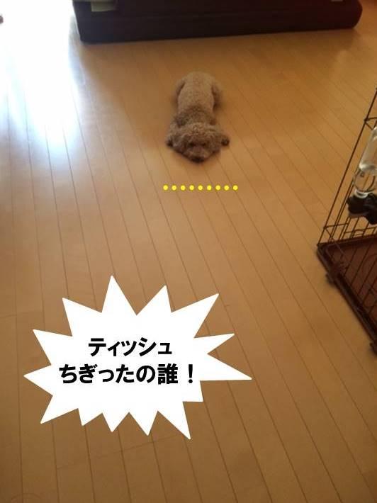 f:id:nanachan59:20170730203726j:plain