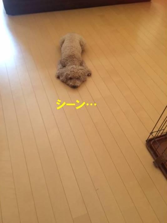 f:id:nanachan59:20170730203806j:plain