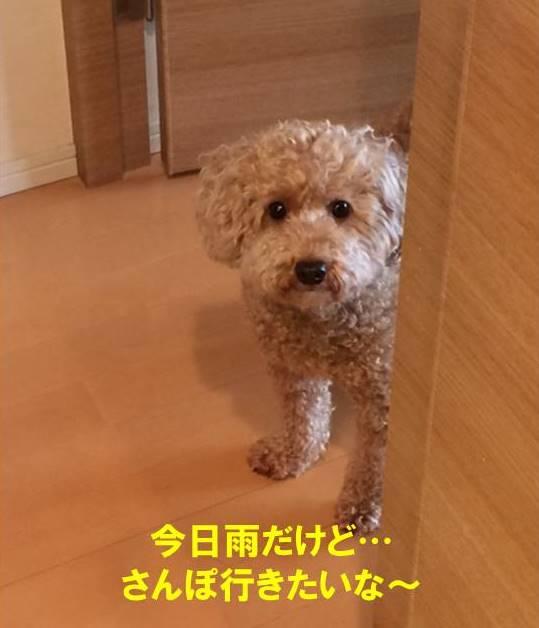 f:id:nanachan59:20170801211035j:plain