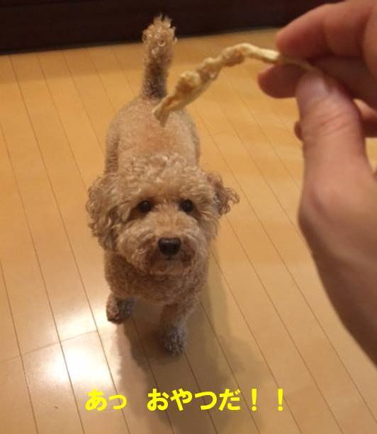 f:id:nanachan59:20170803205921j:plain