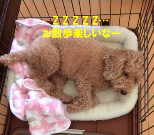 f:id:nanachan59:20170812224122j:plain