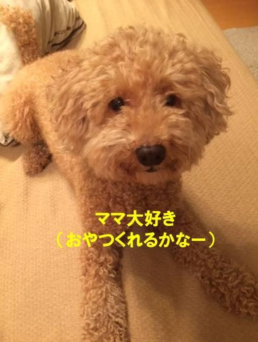 f:id:nanachan59:20170814213039j:plain