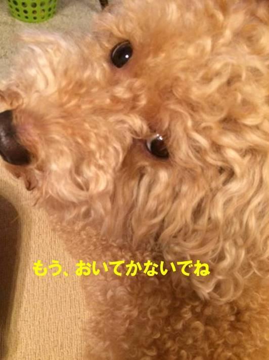 f:id:nanachan59:20170815213445j:plain