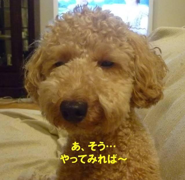 f:id:nanachan59:20170818214731j:plain