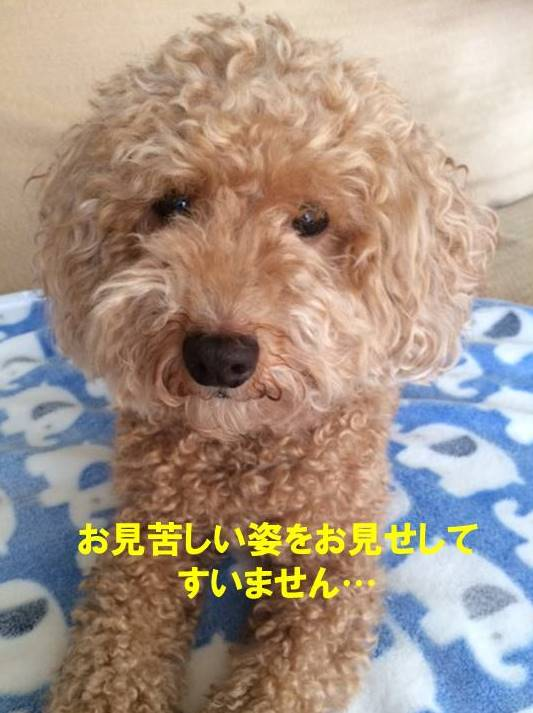f:id:nanachan59:20170820204117j:plain