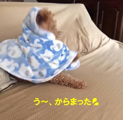f:id:nanachan59:20170821220259j:plain